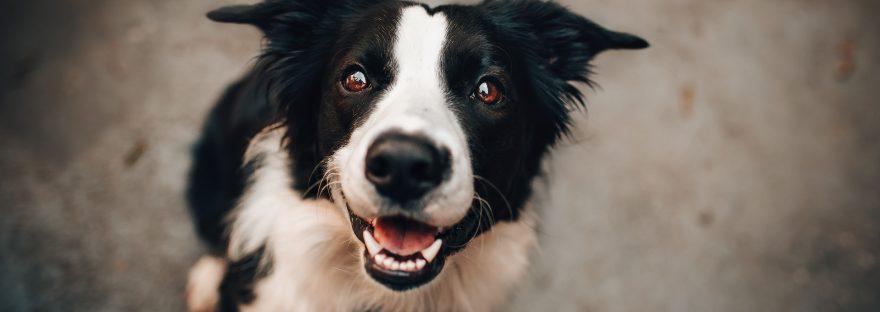 All Female Dog Names A-Z